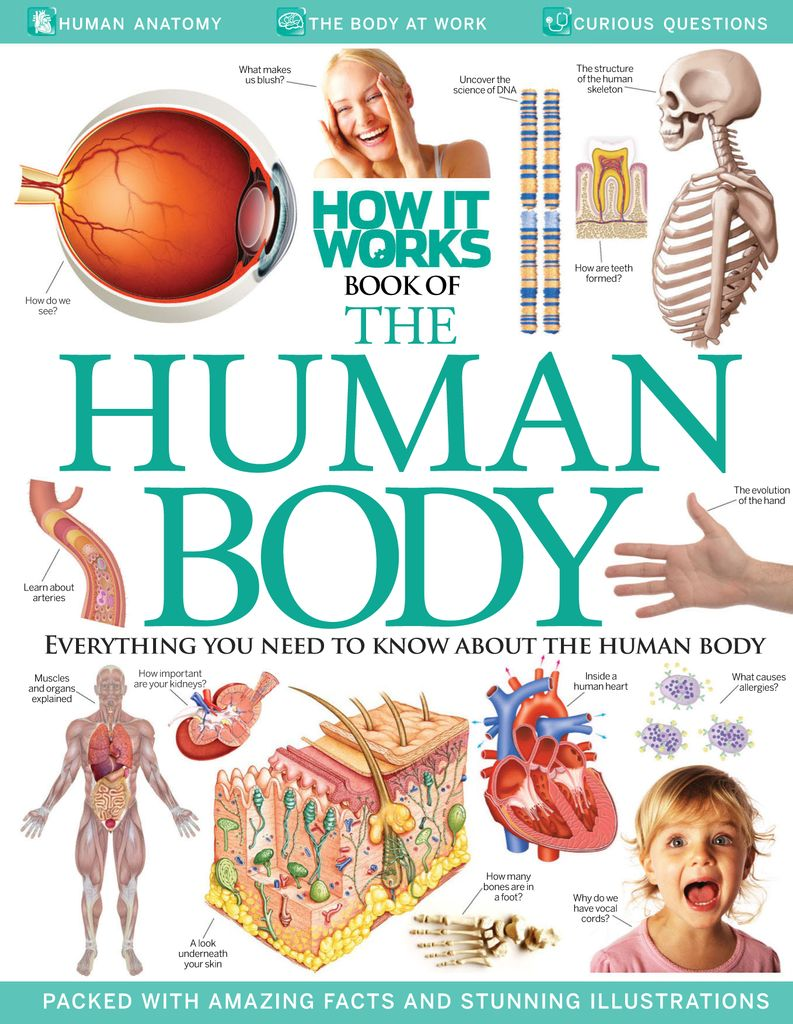 How It Works Book Of The Human Body Subscription