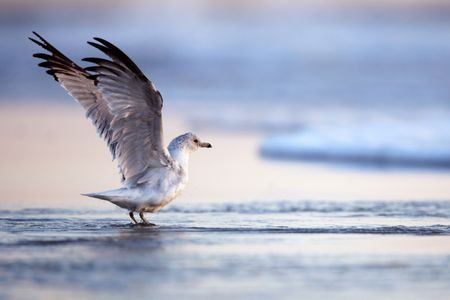 PHOTOGRAPHING SHORE BIRDS