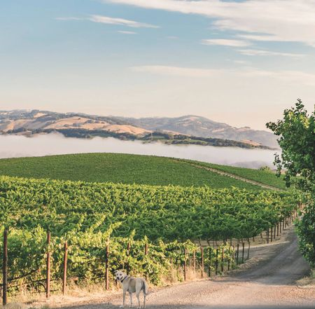 Sonoma's most exciting AVAs