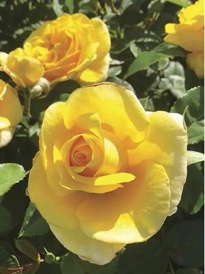 gardeningau2111_article_012_01_01