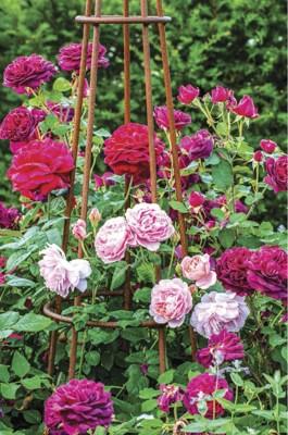 gardeningau2111_article_016_01_01