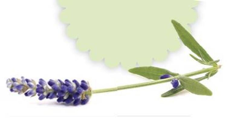 gardeningau2111_article_017_01_01