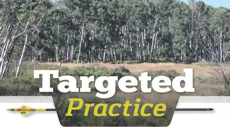 Targeted Practice