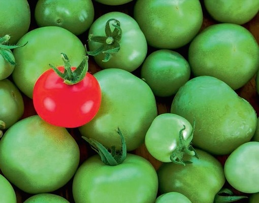 Bunch of tomatoes Valos Advantage
