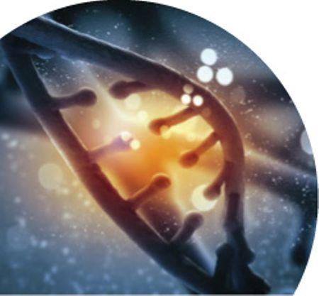 What is Junk DNA?