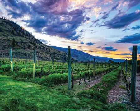 Find your pace in OLIVER OSOYOOS WINE COUNTRY