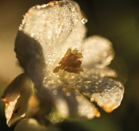 FROSTY MORNING MACRO