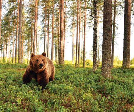 Running in Bear Country