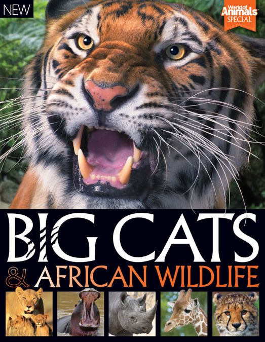 World of Animals Book of Big Cats and African Wildlife