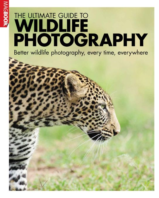 Ultimate Guide Wildlife photography