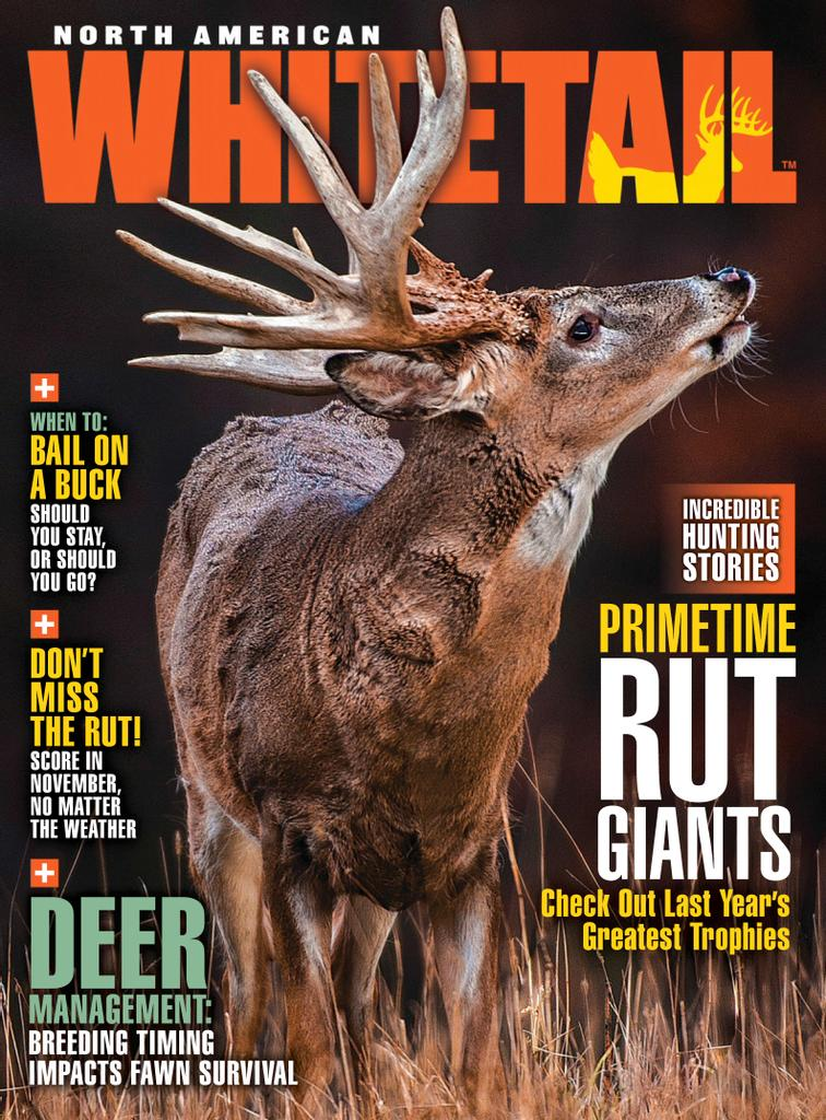 North American Whitetail