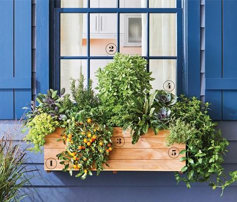 012-edible-window-box-numbers