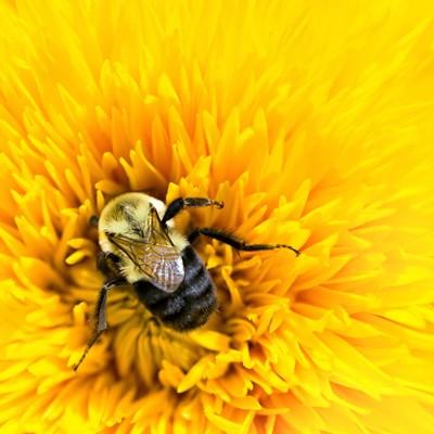 p009-ETG0421-bee-flower