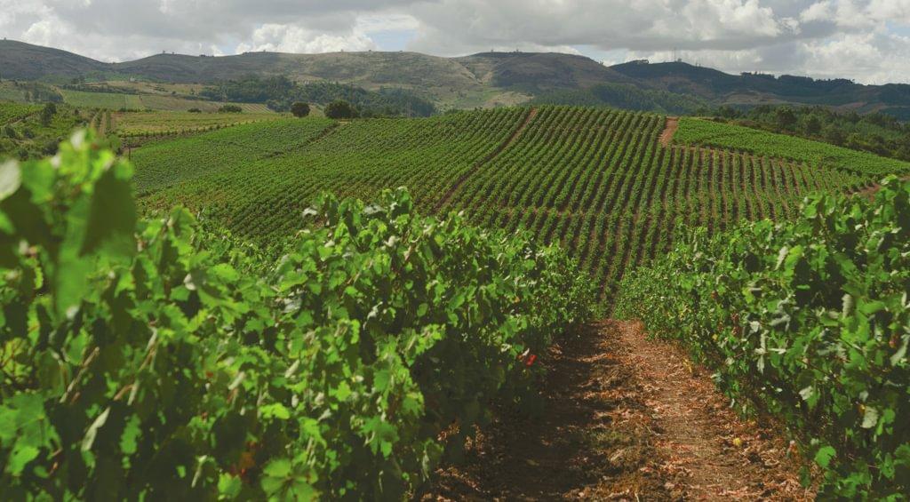 LISBOA Wines